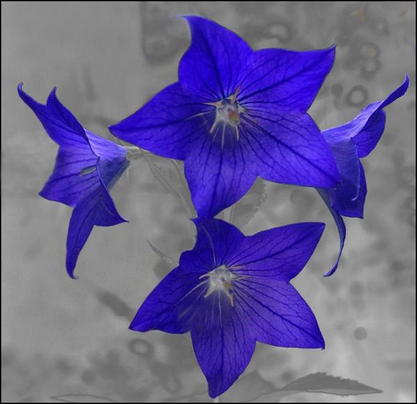 four blues