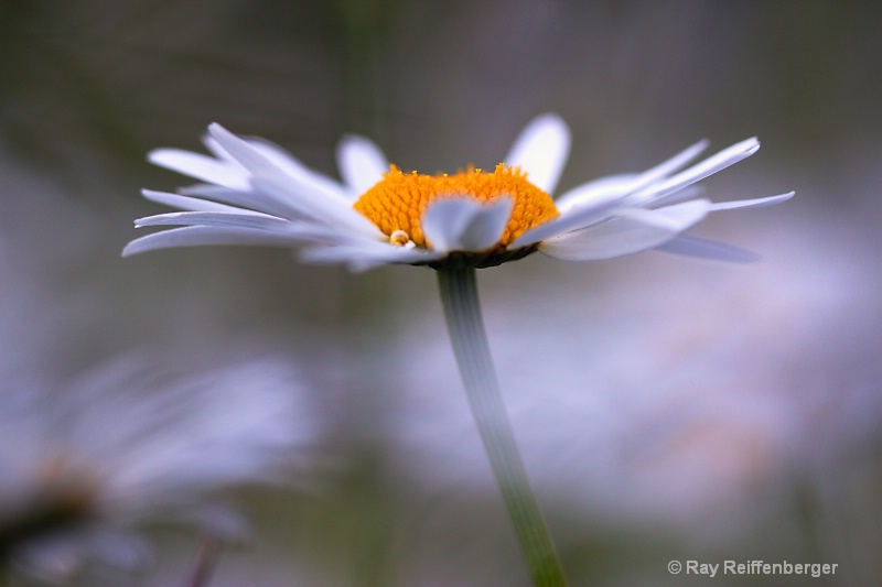 spring flower 080612 5250