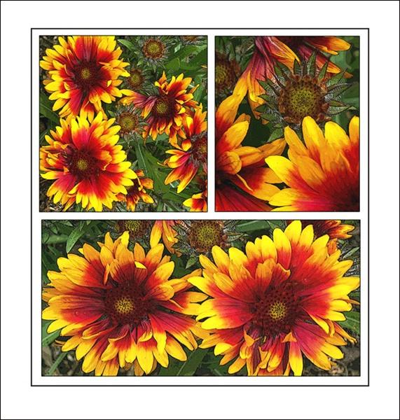 Red Yellow Flowers three
