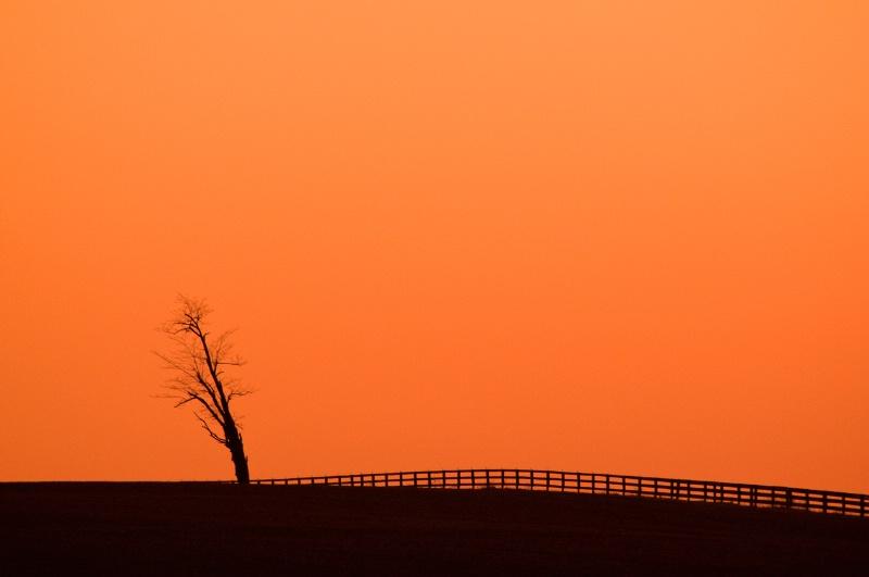 Highway Sunset Tree