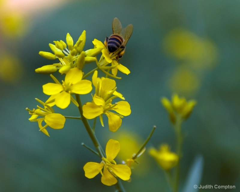 right bee-hind you