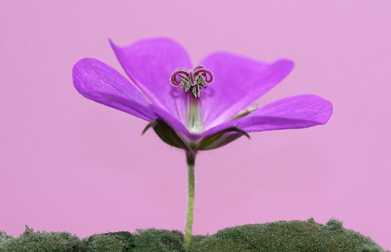 Purple and Pretty