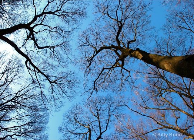 Tree Tops - Arisugawa