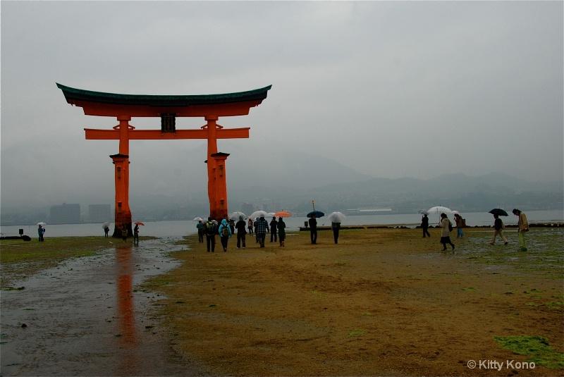 Tori in the Rain in Miyajima