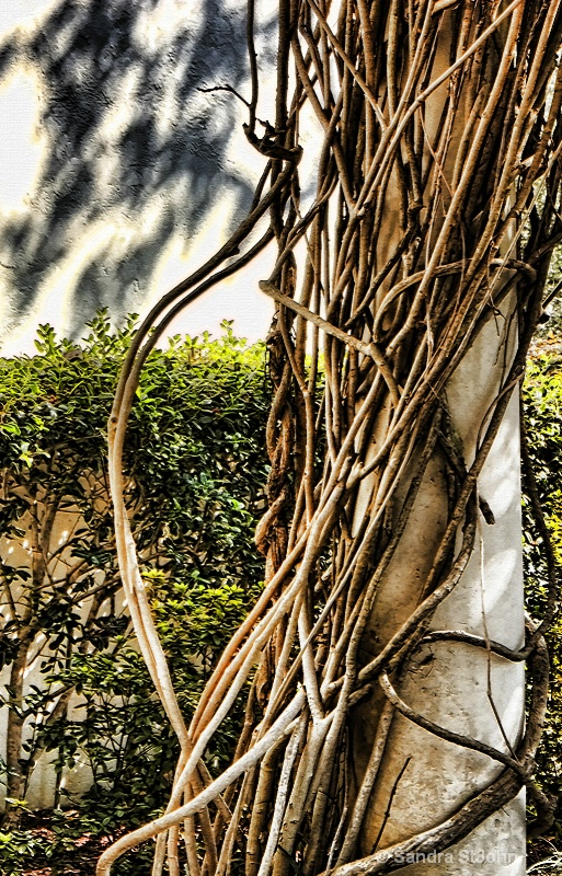 Shadow and Vine