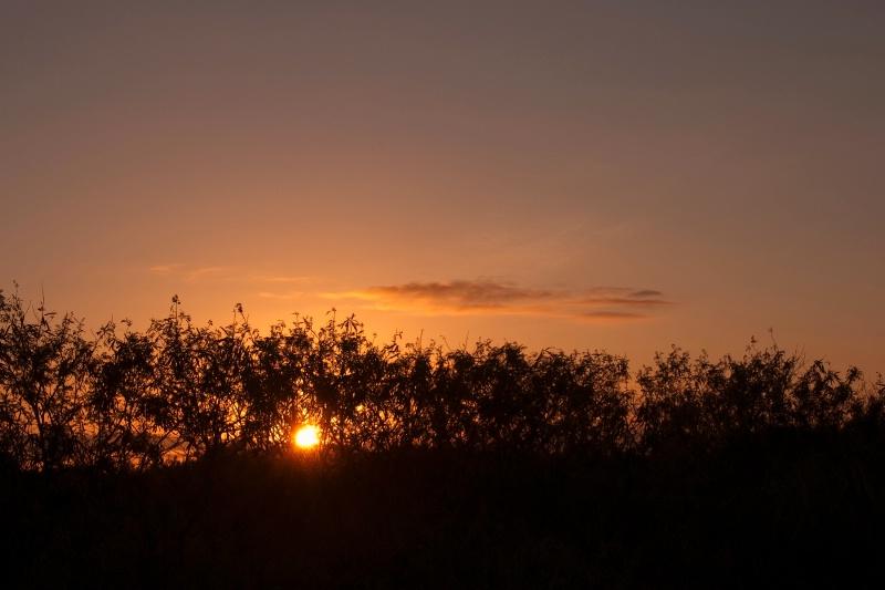 Okinawa sunset through the trees