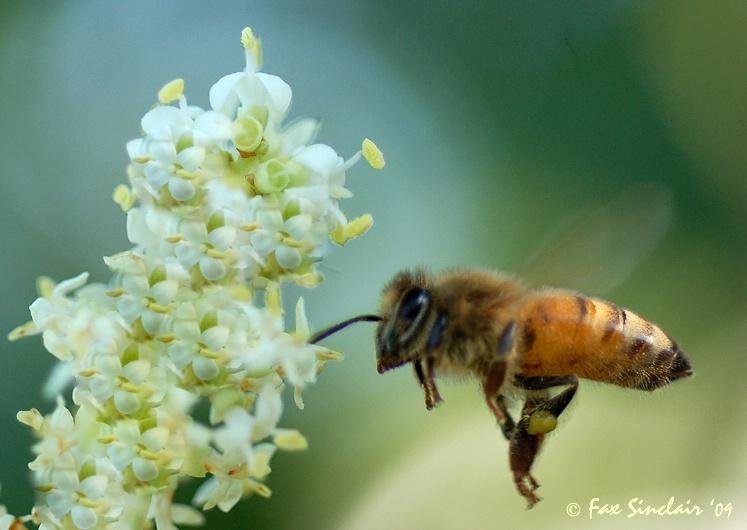 Bee Heaven 2
