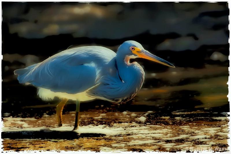 Heron on the Bay