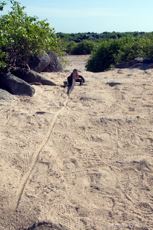 Goodbye to the Galapagos