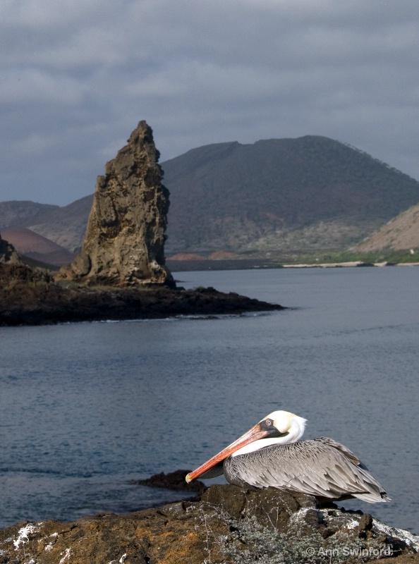 Pinnacle and  pelican