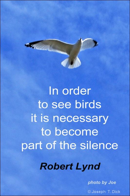 Seagull Meditations #3