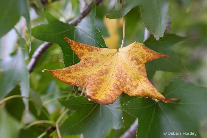 golden leaf  tripod