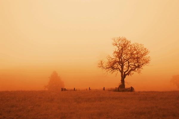 Foggy Morning - Sepia