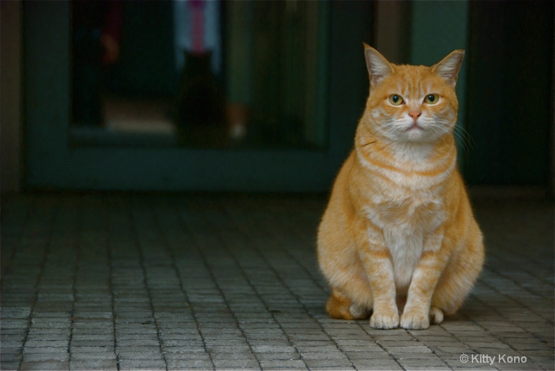 Another Garfield Pose - Near Omoto Sando