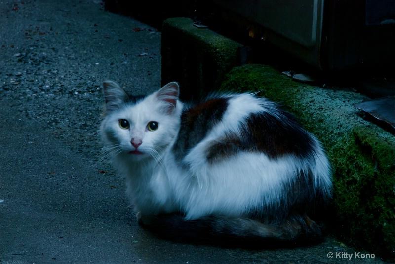 Black and White Kitty - Road to Nishimachi