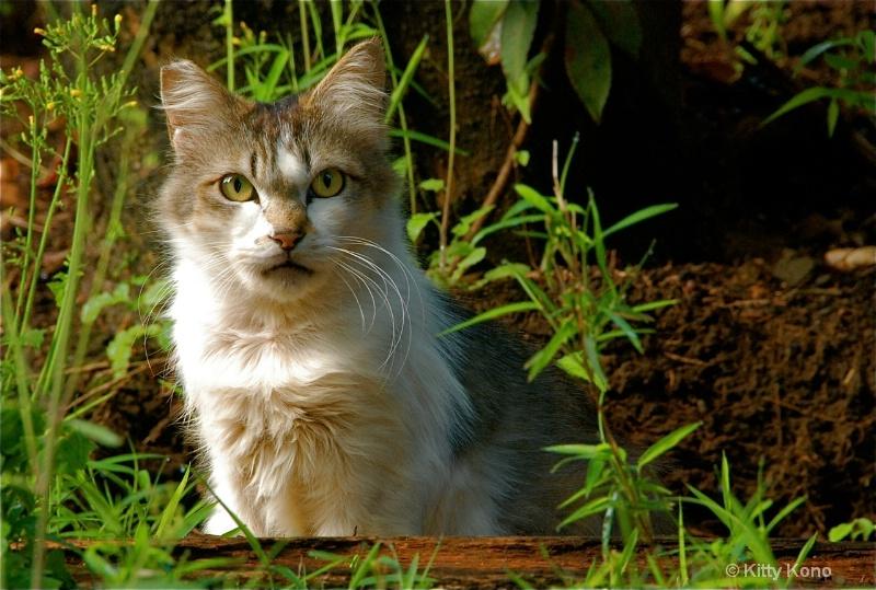 Pretty Kitty Framed by Green - Nearby Cemetery