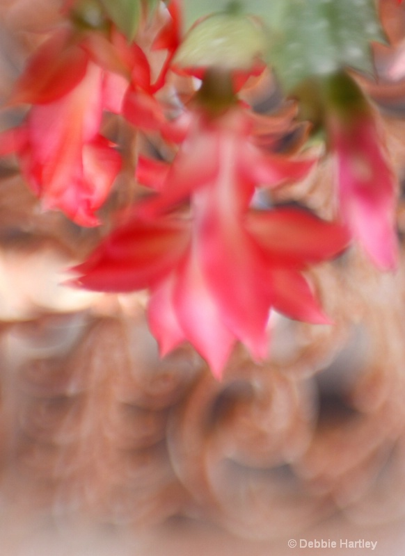 hanging cactus out of focus pa