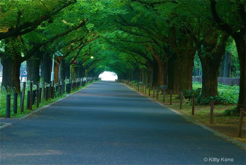 Gaen Dori (Ginko Tree Lane)  Spring