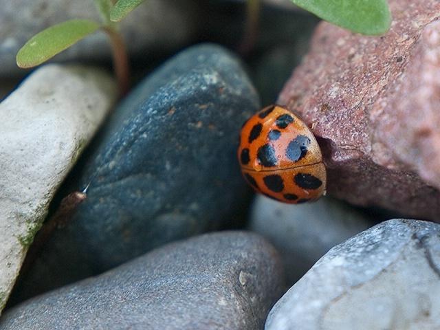 Bug On The Rocks