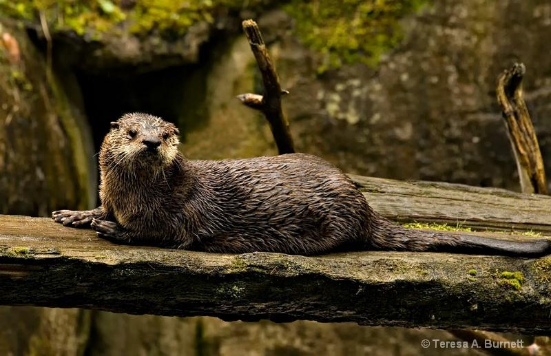 Hairy P Otter