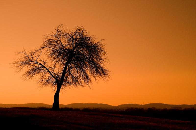 Monocacy Battlefield Tree