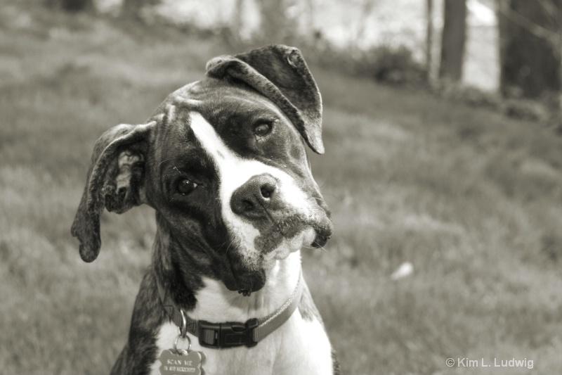 Black & White Boxer