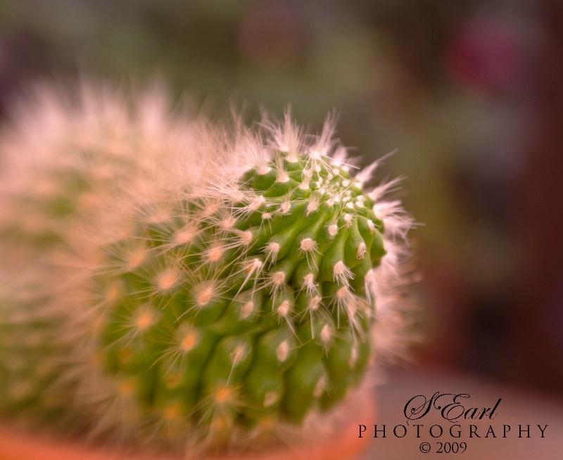 Tripod #1 @ Cactus