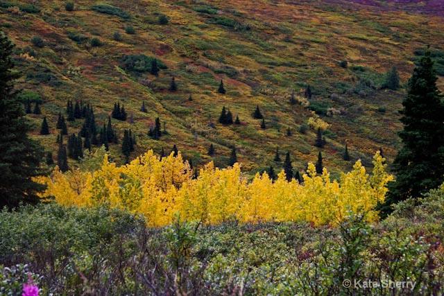color in Alaska