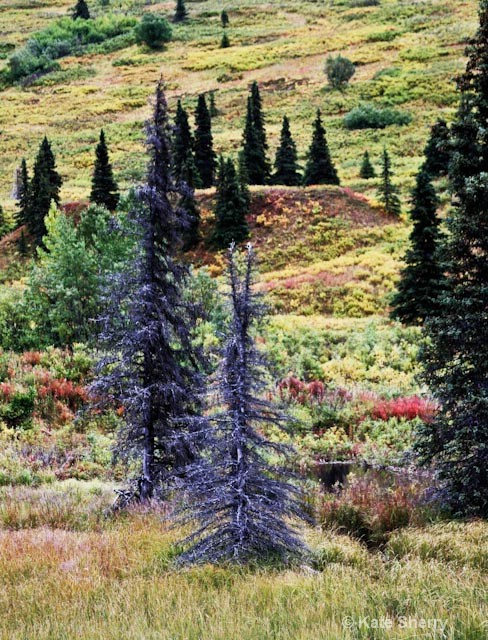 tundra colors trees and hillside