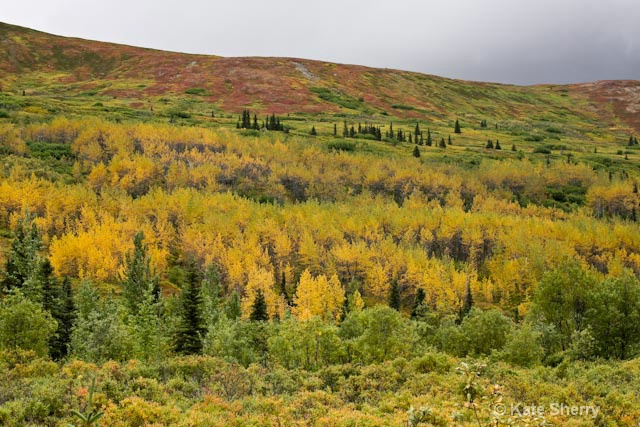 tundra colors on the hill