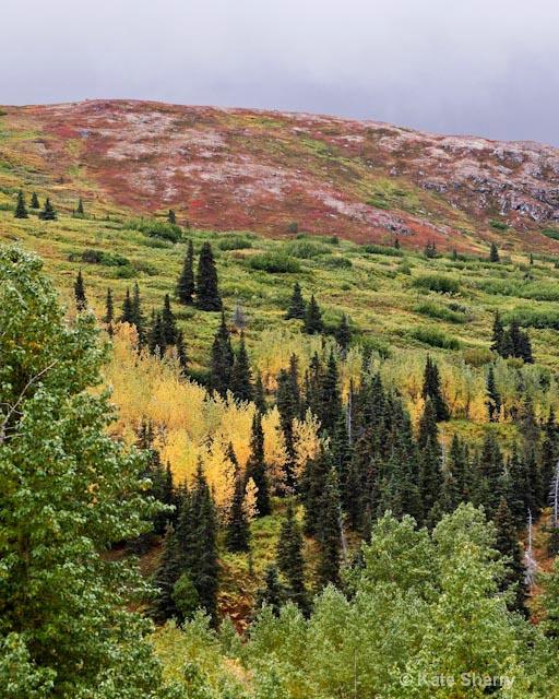 tundra colors2