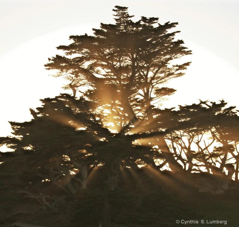Cypress Light 2