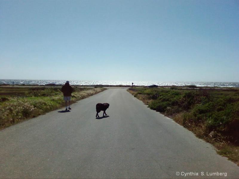 A walk to the Ocean