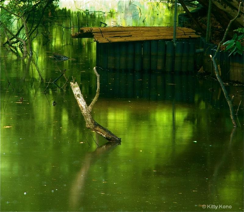 Bamboo and Driftwood at Meiji Shrine Garden Pond
