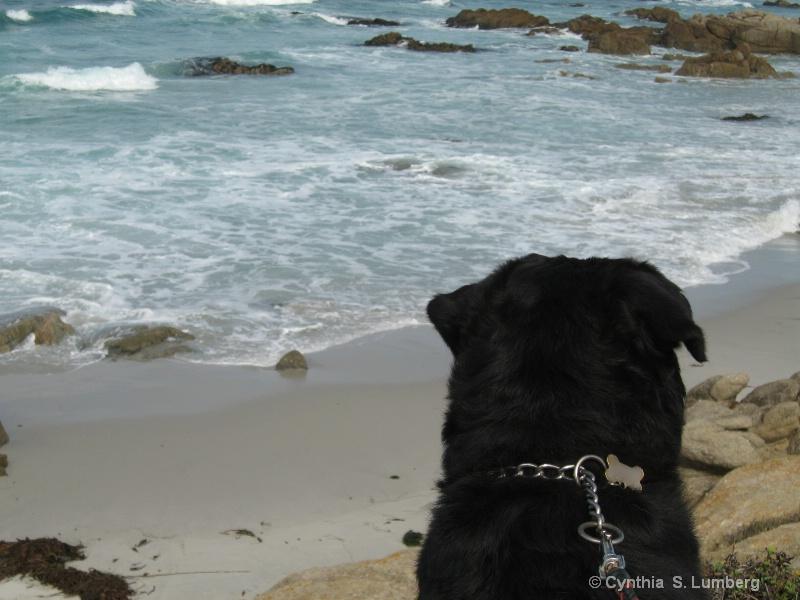 Mom, I sure love the beach!