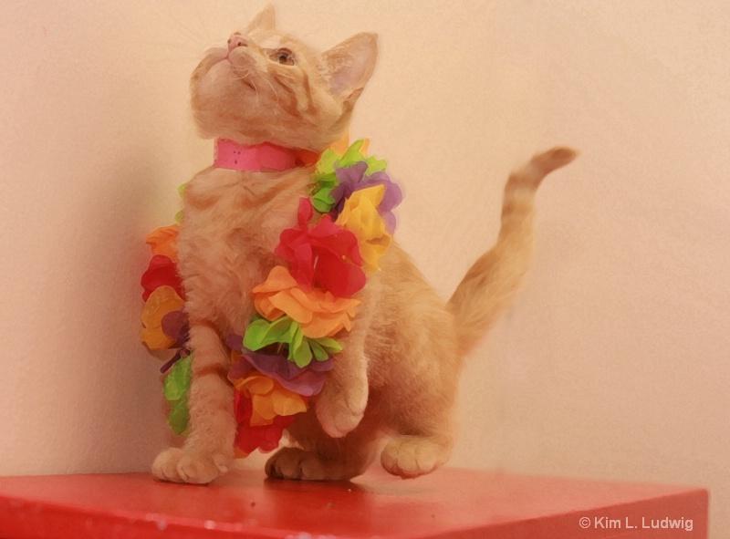 Do A Little Dance!
