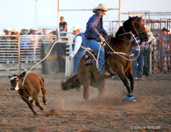 Loopty Loop style calf roping