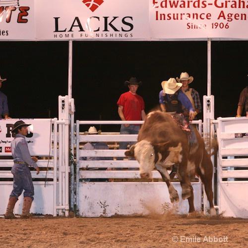 2008 Rodeo Bullride