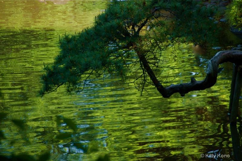 Crooked Pine