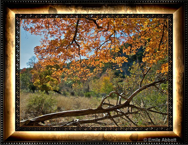 Autumn at Lost Maples