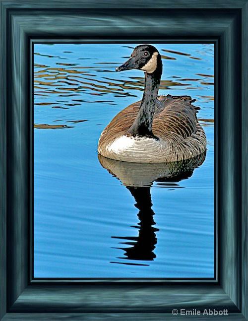 Framed Duck