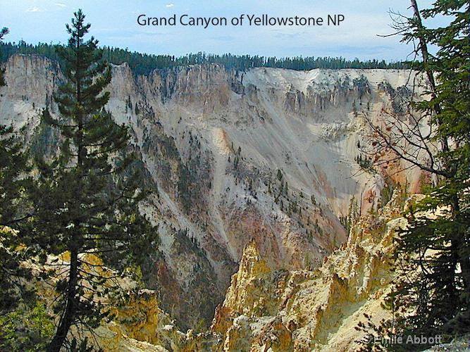 grand canyon of yellowstone np