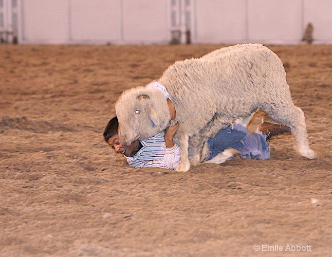 Kids sheep ride contest