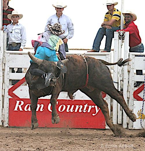 Smurf bull riding backward