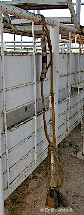 The bull rope
