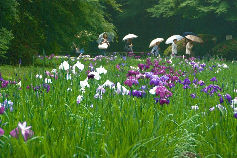 Iris Garden and Visitors