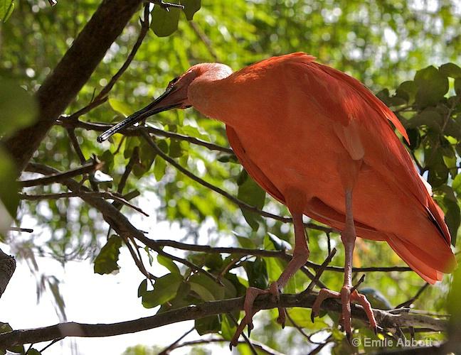 Unidentified bird in tree