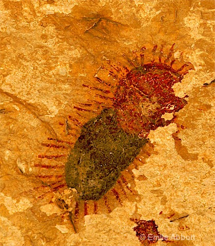 Pictograph of Millipede