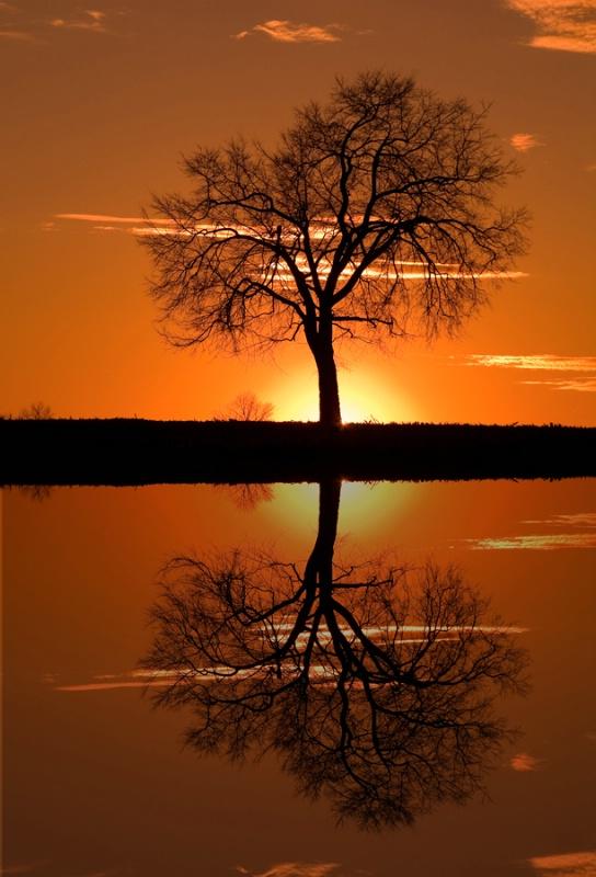 Monocacy Sunset Tree Reflection