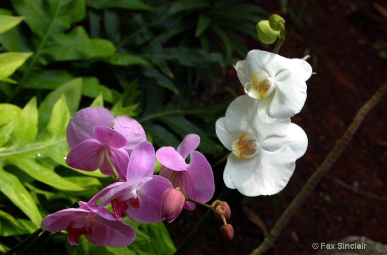 Hokukano Flowers 4